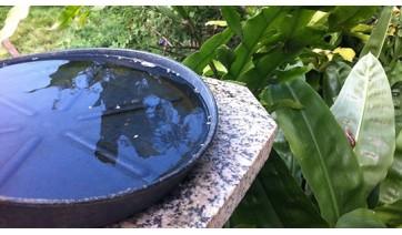 Recipientes que acumulam água são criadouros do mosquito aedes aegypti (Ilustração).