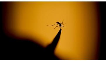Adamantina registra 443 casos de dengue e SUCEN não tem previsão sobre reposição de inseticida