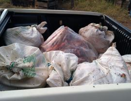 Abatedouro clandestino foi localizado em Emilianopólis. Carne foi descartada, por estar imprópria para consumo (Foto: Cedida/Polícia Ambiental).
