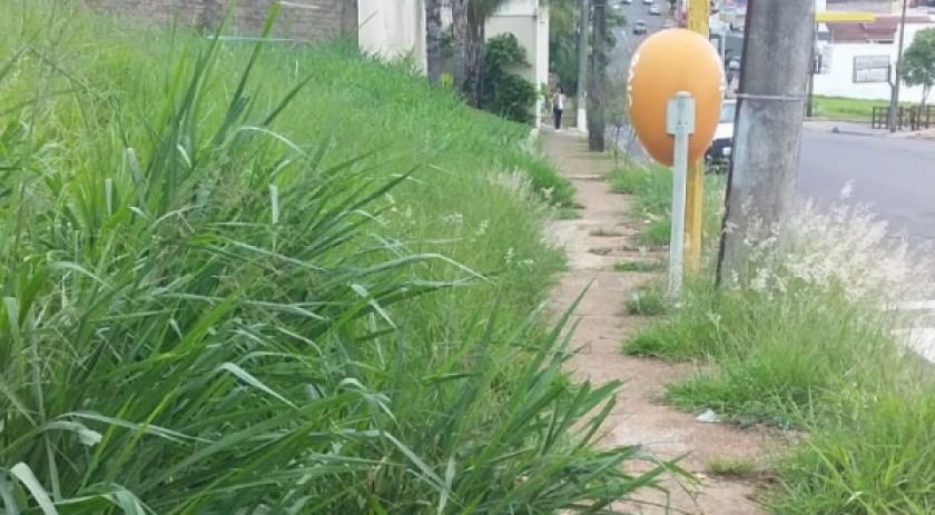 Prefeitura já notificou mais de 1200 proprietários para limpeza e reparos em terrenos
