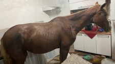 Cavalo cai de telhado e vai parar em cozinha de casa