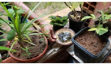 Prefeitura de Adamantina fortalece medidas de combate à dengue
