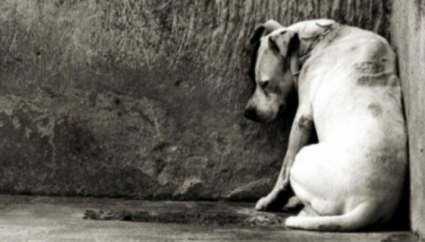 Município deverá recolher e abrigar cães e gatos e garantir veterinário gratuito
