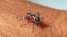 Idosos de 70 anos que morreu em janeiro em Osvaldo Cruz tinha dengue