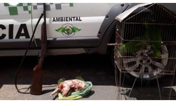 Após denúncia anônima, PM Ambiental apreende arma de fogo, tatu abatido e aves silvestres