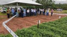 APTA realiza evento para discutir genética e tecnologia do amendoim em Adamantina