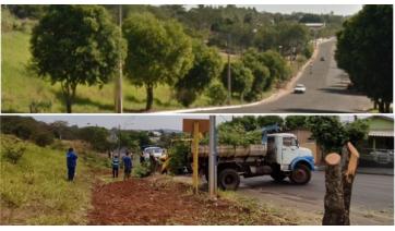 O antes e o depois da supressão de árvores na Avenida Antônio Tiveron  (Google Street View Cedida).