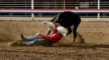 Justiça autoriza prova de bulldog em rodeio
