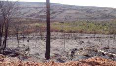 Pol�cia Ambiental autua usina em mais de R$ 1,7 milh�o por fogo em propriedade