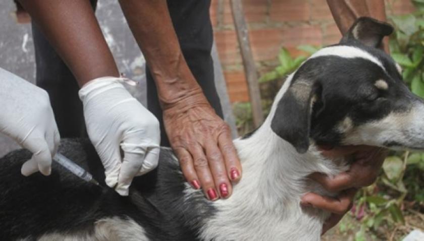Vacinação antirrábica e coleta de sangue em cães acontecem de 10 a 31 de agosto