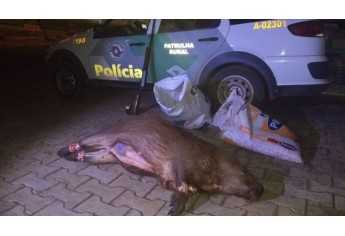 Capivaras foram encontradas já abatidas, em rancho na região do Salto Botelho, em Lucélia  (Foto: Cedida/PM Ambiental).