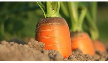 """Agrotóxicos: """"alimentos vegetais são seguros"""", diz Anvisa"""