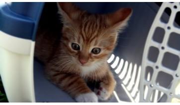 Fuga de gato de clínica veterinária gera dever de indenizar