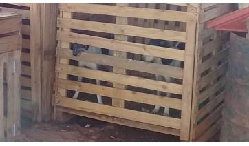 Após denúncia, Polícia Ambiental constata maus tratos a cães e aplica multa de R$ 60 mil