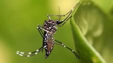 Controle de vetores alerta sobre perigos da dengue durante período de chuvas