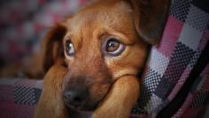 Clinicão alerta: 7 alimentos que podem matar seu cão