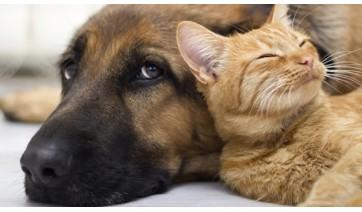 Cães e gatos disponíveis para adoção estarão na praça Élio Micheloni na manhã deste sábado (Ilustração).