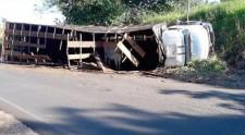 Caminh�o carregado com gado tomba em vicinal