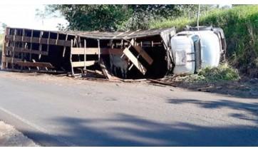 Caminhão carregado com gado tomba em vicinal