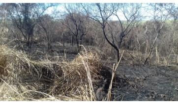 Autuação foi nesta sexta-feira (3). Corporação não divulgou a data em que teriam ocorrido os incêndios e se foram provocados pelos responsáveis pelas propriedades ou terceiros (Foto: Divulgação/PM Ambiental).