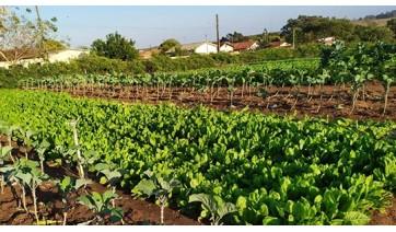 Projeto horta comunitária no Jardim Adamantina