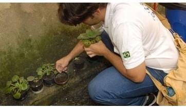 Dengue: de 11.153 imóveis vistoriadas em junho, 48% tinham possíveis criadouros