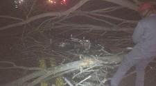 Homem morre após colidir moto em árvore caída na SP-294