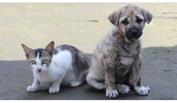 Secretaria de Saúde em parceria com a UniFAI realiza castração de cães e gatos