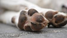 Pet shop deve indenizar cliente por morte de filhote três dias após compra