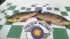 Polícia Ambiental autua duas pessoas por pesca irregular na piracema em Adamantina