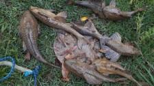 Homem é autuado em Flórida Paulista por pesca no período de piracema
