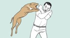 Pitbull ataca e fere homem de 54 anos