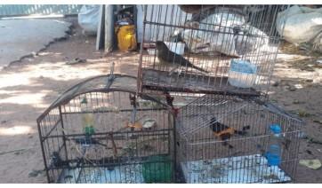 Cinco aves da fauna silvestre mantidas em cativeiro foram resgatadas pela PM Ambiental e devolvidas à natureza (Cedida/PM Ambiental).