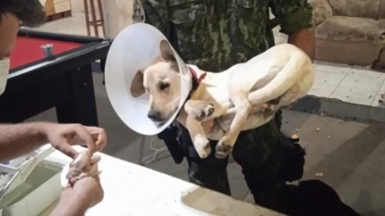 PM Ambiental resgata cão castrado em república; estudantes postaram em vídeo que fariam a castração