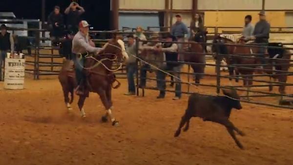 Decisão debate conflito entre manifestação cultural e proteção aos animais (Reprodução/Youtube).