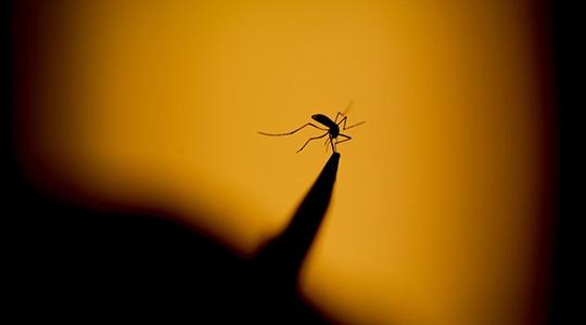 Combate ao Aedes aegypti exige a eliminação de criadouros, entre os quais objetos e recipientes que possam acumular água (Ilustração).
