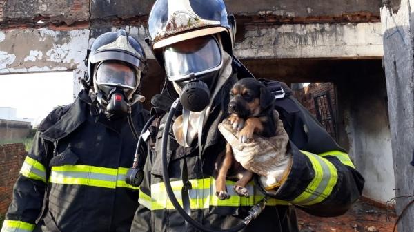 Filhote de cachorro que estava no interior do imóvel foi resgatado pelos Bombeiros (Foto: Corpo de Bombeiros de Osvaldo Cruz / Cedida).