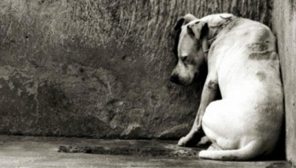 Medidas visando a proteção e defesa a animais como cães e gatos foram pactuadas pela Prefeitura de Adamantina e MPE em novembro passado (Imagem: Ilustração).