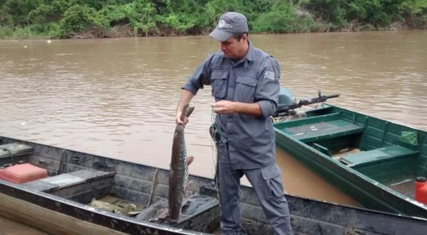 Abordagem de pesca irregular foi no Rio Aguapeí, região do Salto Botelho, em Lucélia (Foto: Cedida/PM Ambiental).