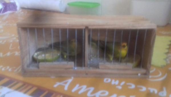 Pequena gaiola onde pássaros foram transportados, em ônibus (Foto: Cedida/Polícia Ambiental).