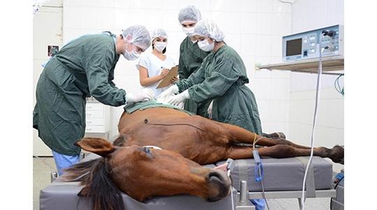 Clínica Veterinária alcança a marca de 10 mil animais cadastrados em atendimento; ficha de número 01 foi datada em agosto de 2005 e, após 14 anos, atingiu-se o número 10 mil (Foto: Daniel Torres).