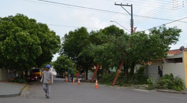 Restos de podas de árvores serão triturados e incorporados a restos do preparo de alimentos das escolas, para decomposição e transformação em adubo orgânico (Ilustração).