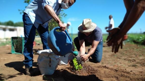 Iniciativa faz parte de um projeto terapêutico com os pacientes para a modificação dos ambientes externos com a implantação de horta, pomar e inserção de animais  (Foto: Vanessa Alonso).