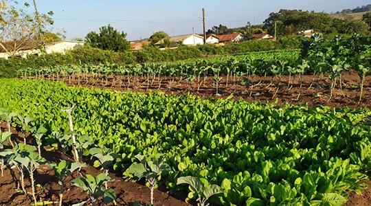 No local são produzidos: alface, couve flor, almeirão, repolho, cenoura, salsa, cebolinha, mandioca, berinjela, jiló, abóbora e coentro (Da Assessoria).