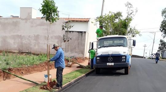 Após cadastro, árvore é plantada no passeio público do solicitante, em até 15 dias (Da Assessoria).
