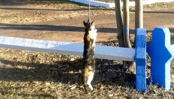 Gato foi encontrado em uma área de lazer próxima ao trevo de Osvaldo Cruz, preso com uma corda, em uma árvore (Foto: Cristiano Nascimento).