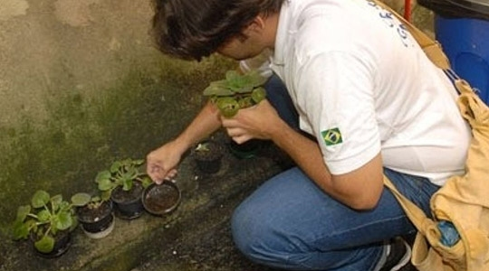 Trabalho a campo revelou cenário preocupante: cuidados com locais que possam acumular água deve ser permanente (Imagem: Ilustração).