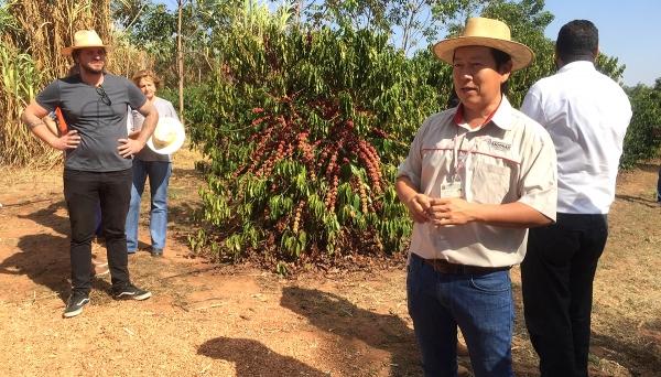 Encontro sobre cultivo do café Robusta foi realizado nesta quinta-feira, na Cafeicultura Eldorado, em Adamantina (Fotos: Siga Mais).