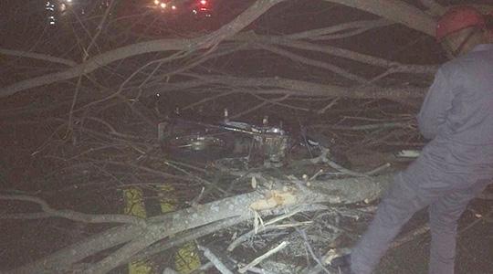 Moto em meio à estrutura da árvore caída na Rodovia (Imagem: João Trentini).