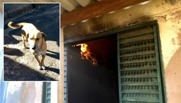 Chamas atingiram alguns cômodos do imóvel e cachorro (no detalhe) conseguiu alertar os vizinhos (Foto: João Trentini/Reprodução G1)